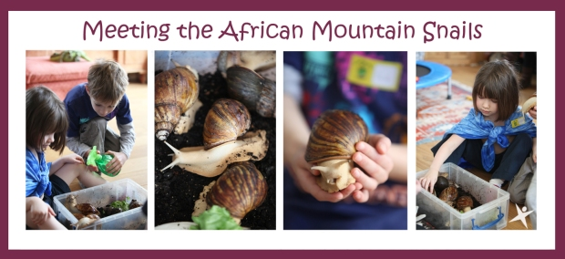 Meeting the African Snail