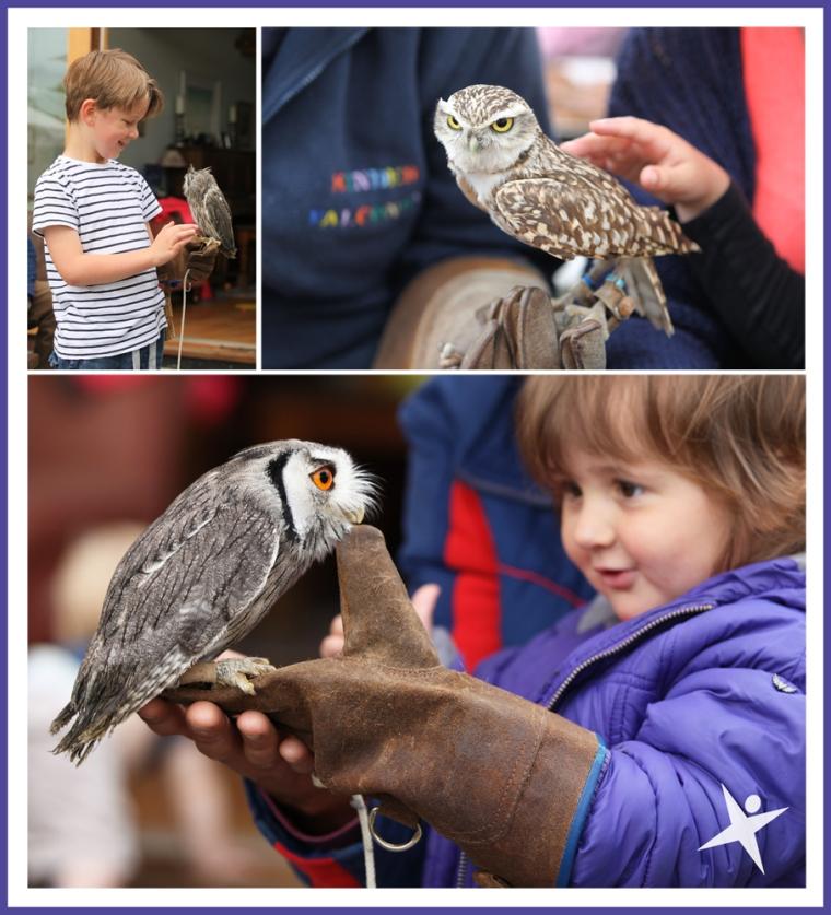 owl handling