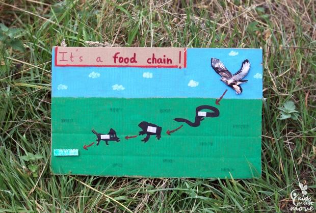 Its a food chain