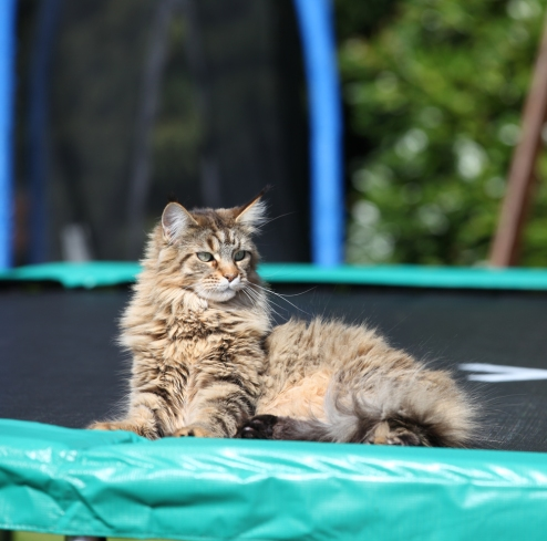 Thula on the new trampoline