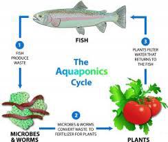 aqua diagram