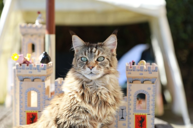 Thula Queen.jpg